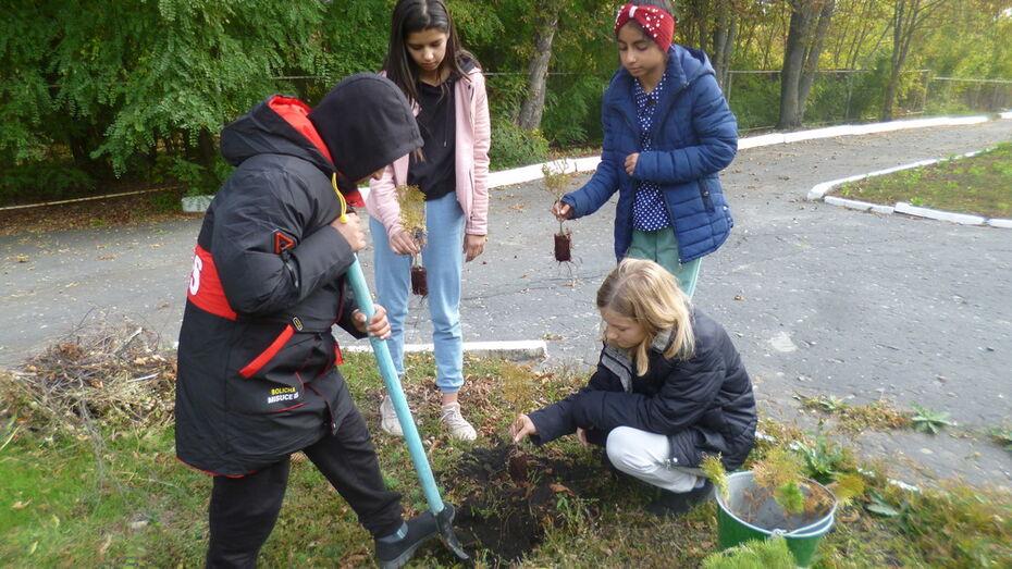 В Каменском районе волонтеры высадили 700 саженцев