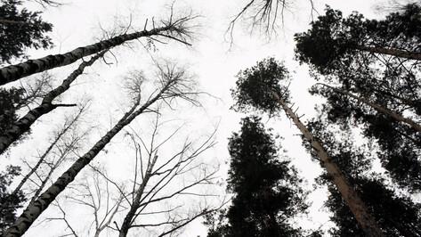 В Воронежской области бабушка пошла за грибами и пропала