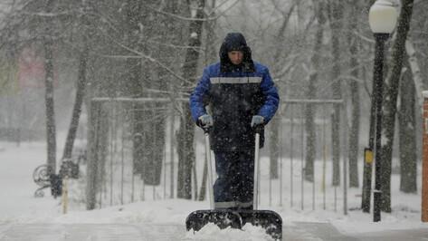 Снежным будет начало февраля в Воронежской области