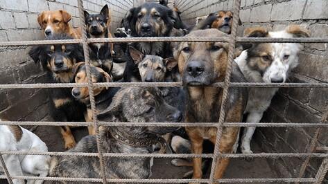 В воронежском приюте «Дора» неизвестные отравили трех собак