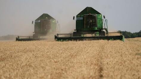 Воронежские аграрии собрали 4,57 млн т зерна