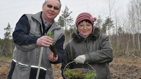 В Репьевском районе в канун 70-летия Победы посадили 6 га леса
