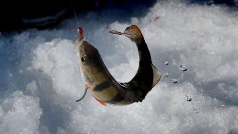 В Воронежской области рыбак провалился под лед и утонул