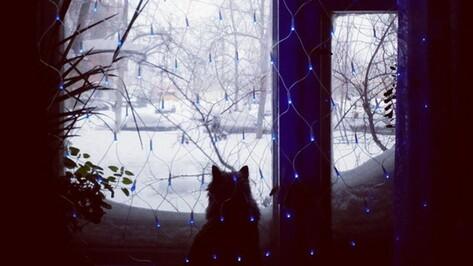 Взгляд из соцсетей: Пурга в Воронеже