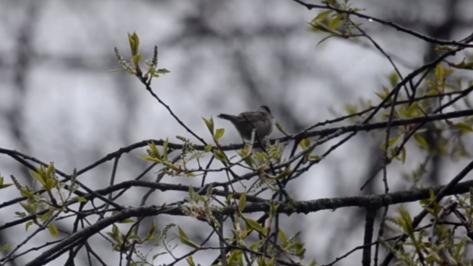 Воронежский заповедник опубликовал видео с весенним пением птиц