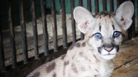 Воронежский зоопарк перейдет на зимний режим работы 1 октября