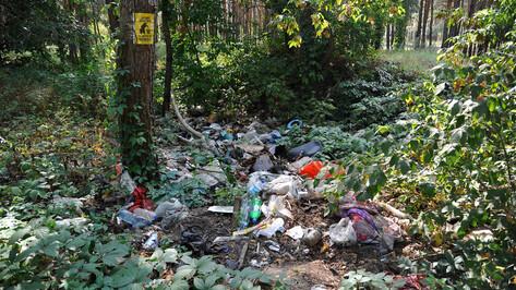 В лесах Воронежской области ликвидируют 53 свалки