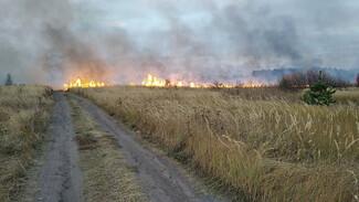 Ландшафтные пожары подобрались к Воронежу