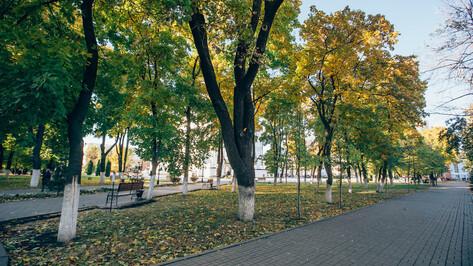 Администрация Воронежа откроет организацию для управления парками и зонами отдыха