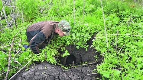 В поселке Воронежской области лисы за неделю съели 100 кур