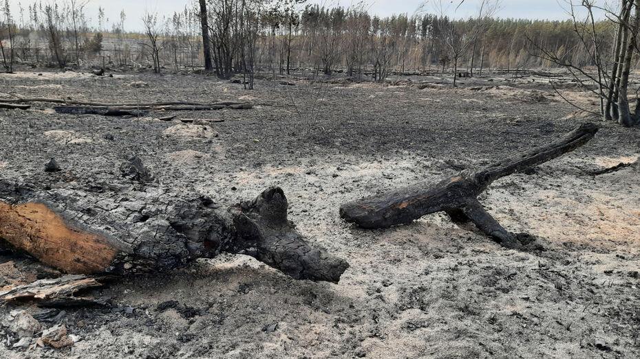 Собственник пострадавших при пожаре участков в Воронежской области обратился в полицию
