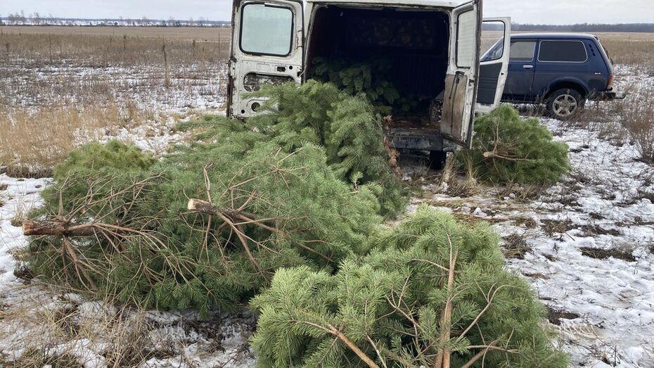 Первого «новогоднего» лесоруба поймали с поличным в Воронежской области