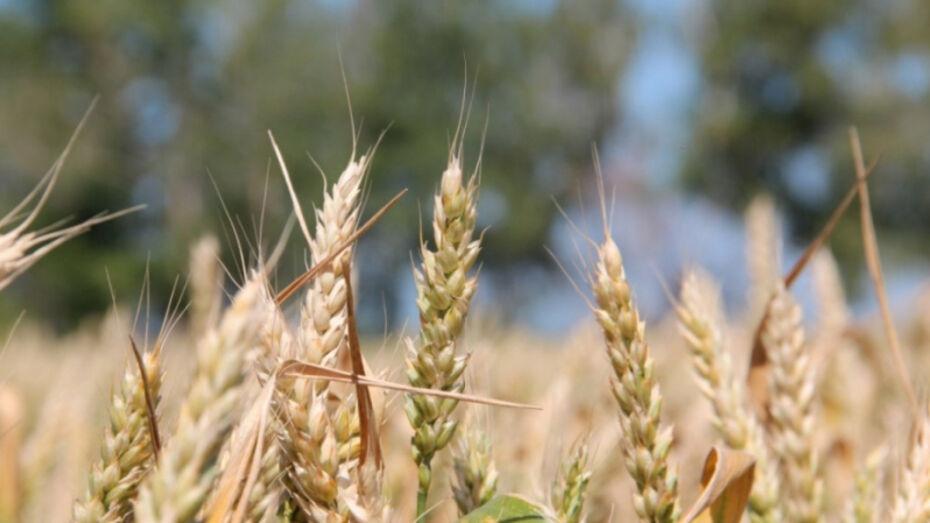 Глава Воронежской области поручил разработать программу по поддержке органической продукции