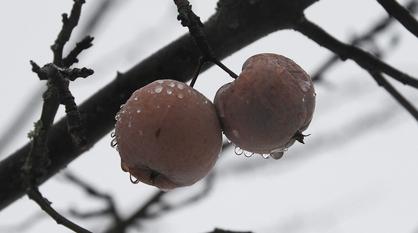 Весна вступит в свои права к концу рабочей недели в Воронеже