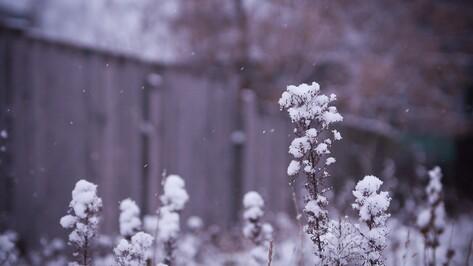 К концу первой рабочей недели 2017 года в Воронеже потеплеет до 0 градусов