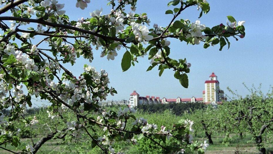 Иск о возврате воронежского яблоневого сада в госсобственность рассмотрят в сентябре