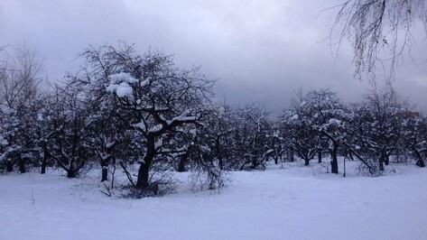 Мэрия Воронежа вынесла на публичные слушания проект застройки яблоневого сада