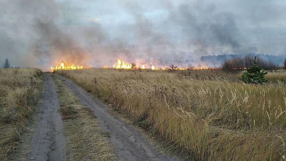 Последний из 3 крупных пожаров в Воронежской области локализовали на площади 185 га