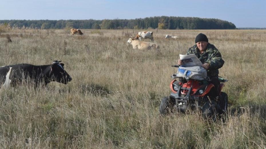 В репьевском селе пастух заменил лошадь квадроциклом