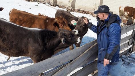 Воронежская область получит 875 млн рублей на развитие сел