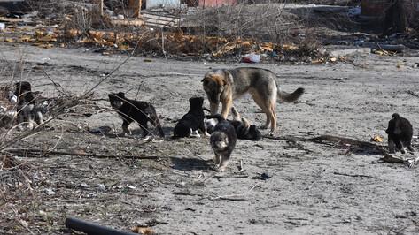 Подозреваемый в жестоком убийстве щенков попал под уголовное дело в Воронеже