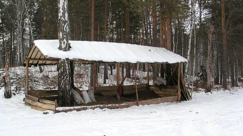 Поворинские предприниматели всю зиму кормили кабанов и косуль