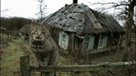 В Липецкой области под суд пойдет убийца воронежца, квартиру которого присвоили «черные риэлторы»