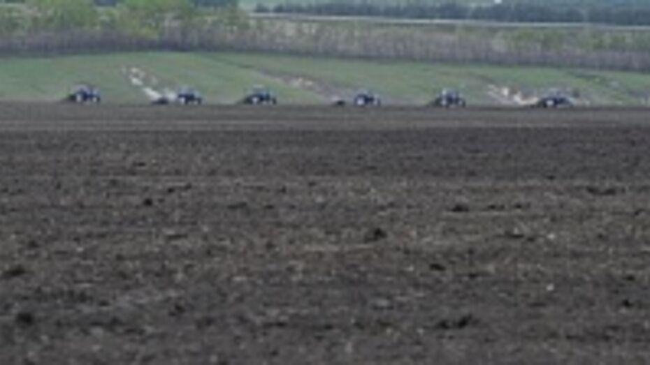 Федеральный бюджет профинансирует покупку элитных семян для аграриев Воронежской области