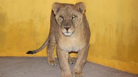 Московский цирк отдал Воронежскому зоопарку 3 животных
