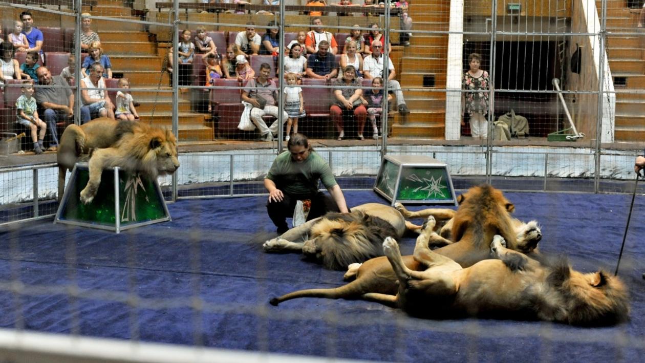 «Ленивее львов только ленивцы». Известные дрессировщики ответили на вопросы воронежцев