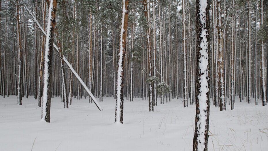 Организатор вырубки леса в Воронежской области оказался предпринимателем