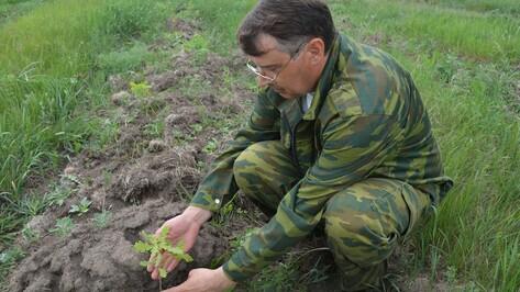 Нижнедевицкие лесники проверили состояние молодых лесопосадок
