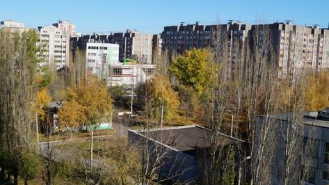 В Воронеже до конца осени посадят более 2,5 тыс деревьев