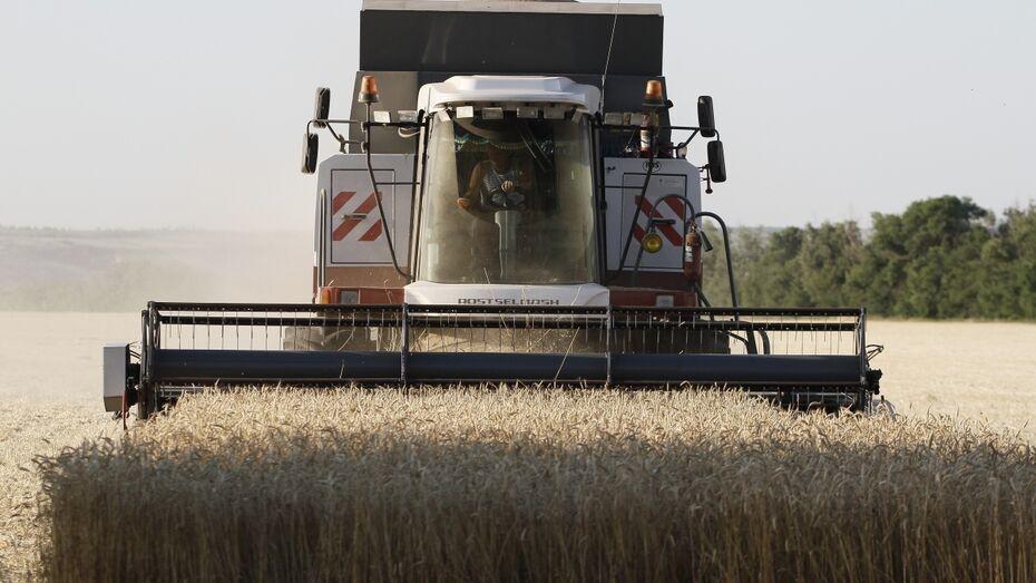 Хохольские сельхозпредприятия за год увеличили прибыль на 43%