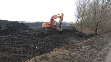 В Воронежской области незаконно вырубили 400 парковых деревьев