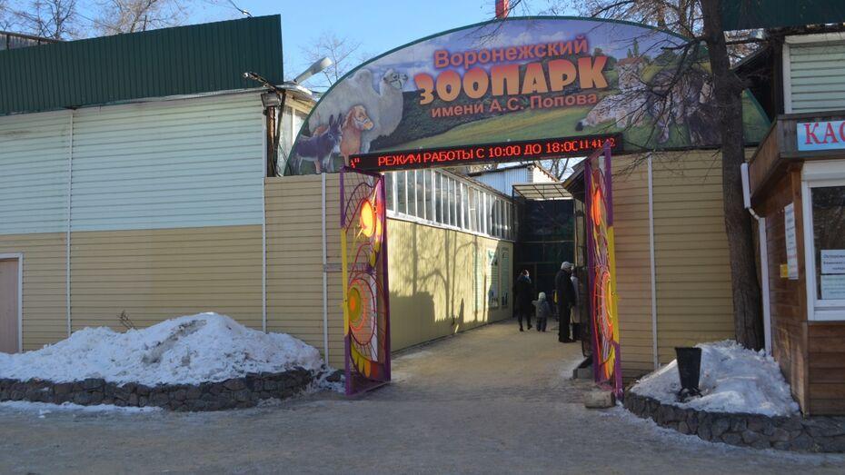 Воронежский зоопарк временно приютил самку сбежавшего тигра