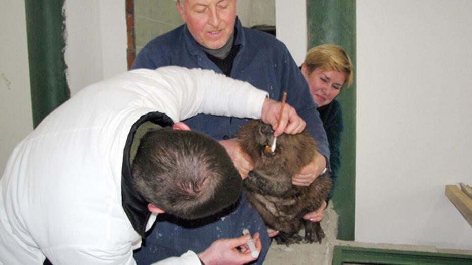 У бобров в Воронежском заповеднике есть свои стоматологи