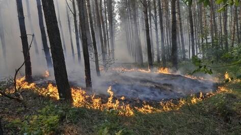 Воронежская область проведет реформу управления лесным хозяйством