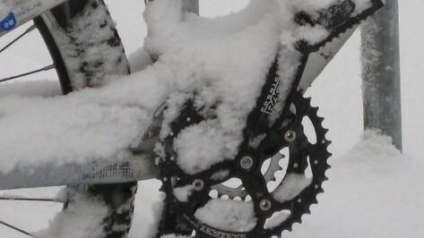 Под колесами внедорожника в Воронежской области погиб 64-летний велосипедист