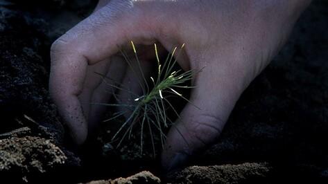 В новоусманском поселке посадят почти 100 деревьев в рамках акции «Лес Победы»