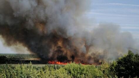 В пойме реки Битюг в Боброве выгорело 5 га травы и камыша