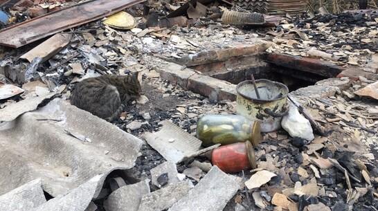 Сбежавшие от пожара кошки стали возвращаться в воронежскую Николаевку