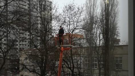 Спасение привязанного к дереву грача в Воронеже попало на видео