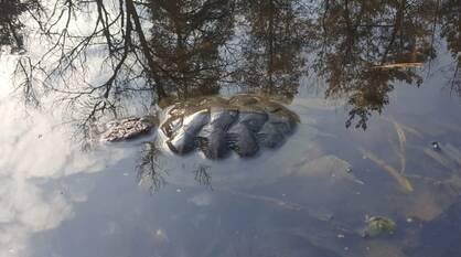 Началась проверка Черепашьего озера под Воронежем