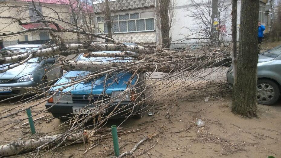 Воронежцы 2 тыс раз позвонили спасателям с жалобами на ветер
