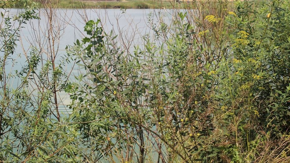 В Таловском районе утонул 34-летний сельчанин