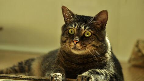 В 2020 году в Воронежской области бешенством чаще всего заболевали кошки
