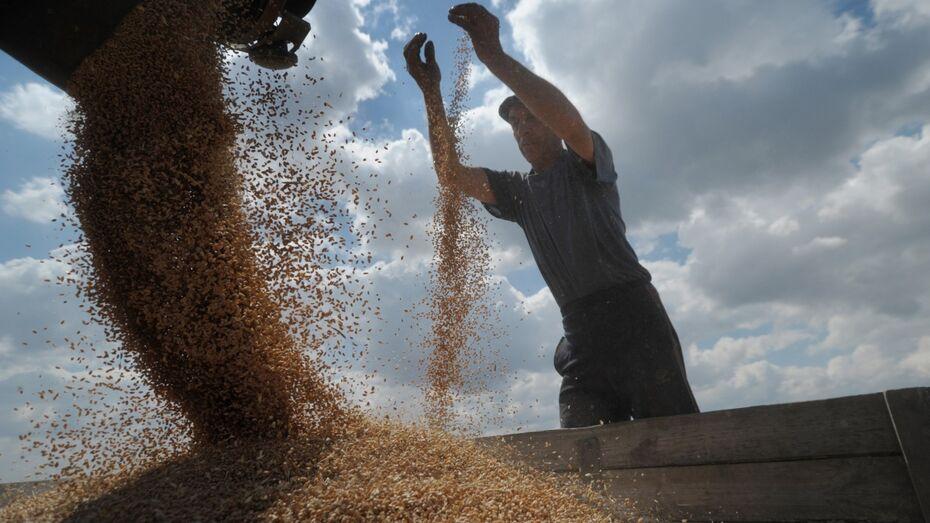 Воронежские фермеры получат 32,9 млн рублей из федбюджета