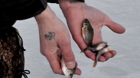 Воронежские спасатели уговорили 3 рыбаков покинуть лед