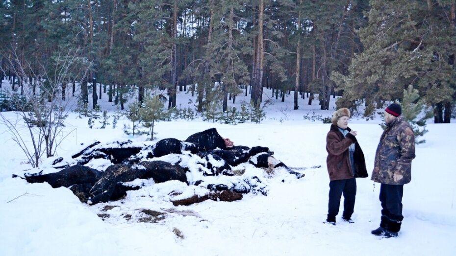 В Воронежской области полиция возбудила уголовное дело по факту падежа скота